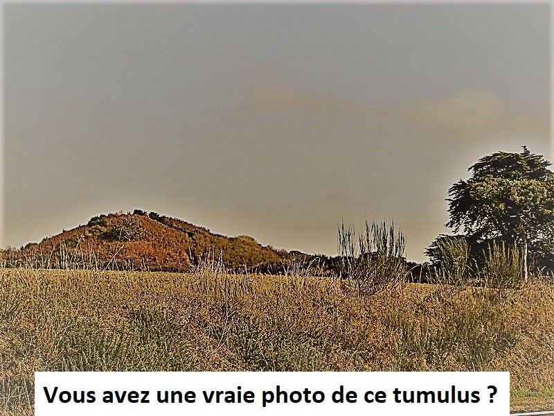 Photo de Tumulus du Tertre à Soings-en-Sologne