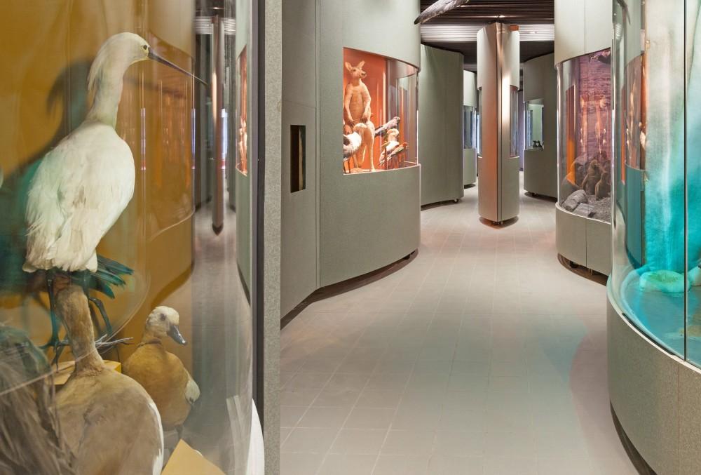 Muséum D Histoire Naturelle De Dijon Musée Du Patrimoine De France